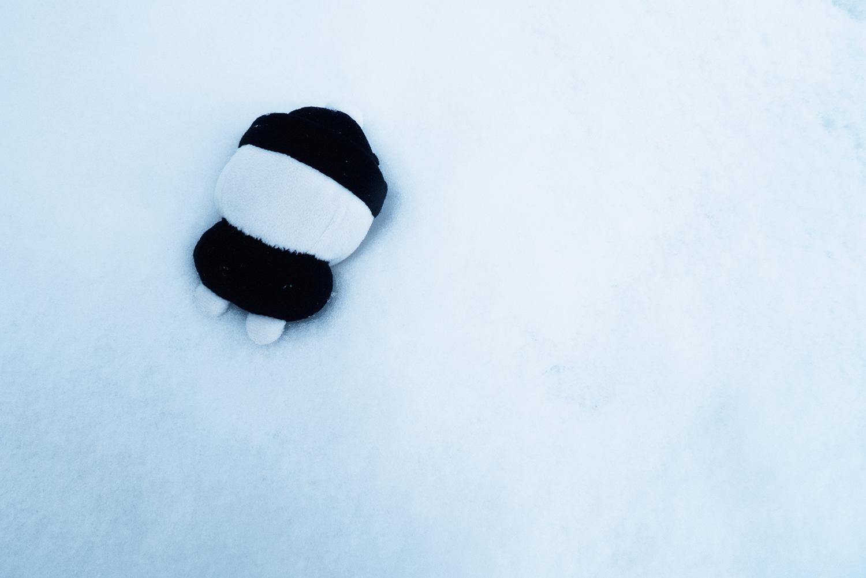 しまむらくん雪原にダイブ