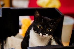 子猫 白黒 モーモーカラー