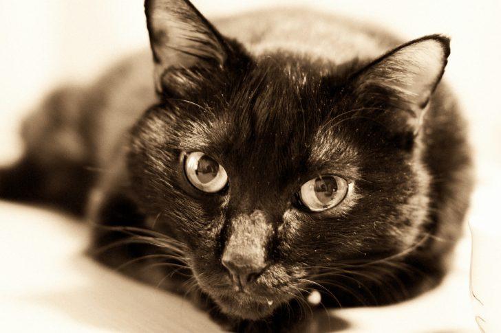 セピア 黒猫
