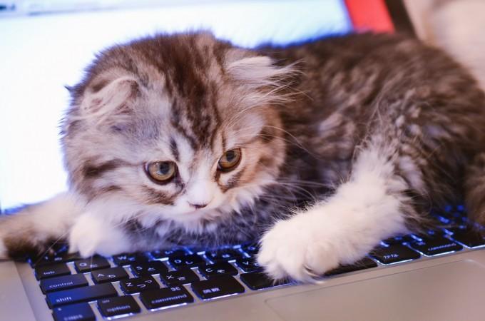 MacBookのキーボードを占拠してるオス猫