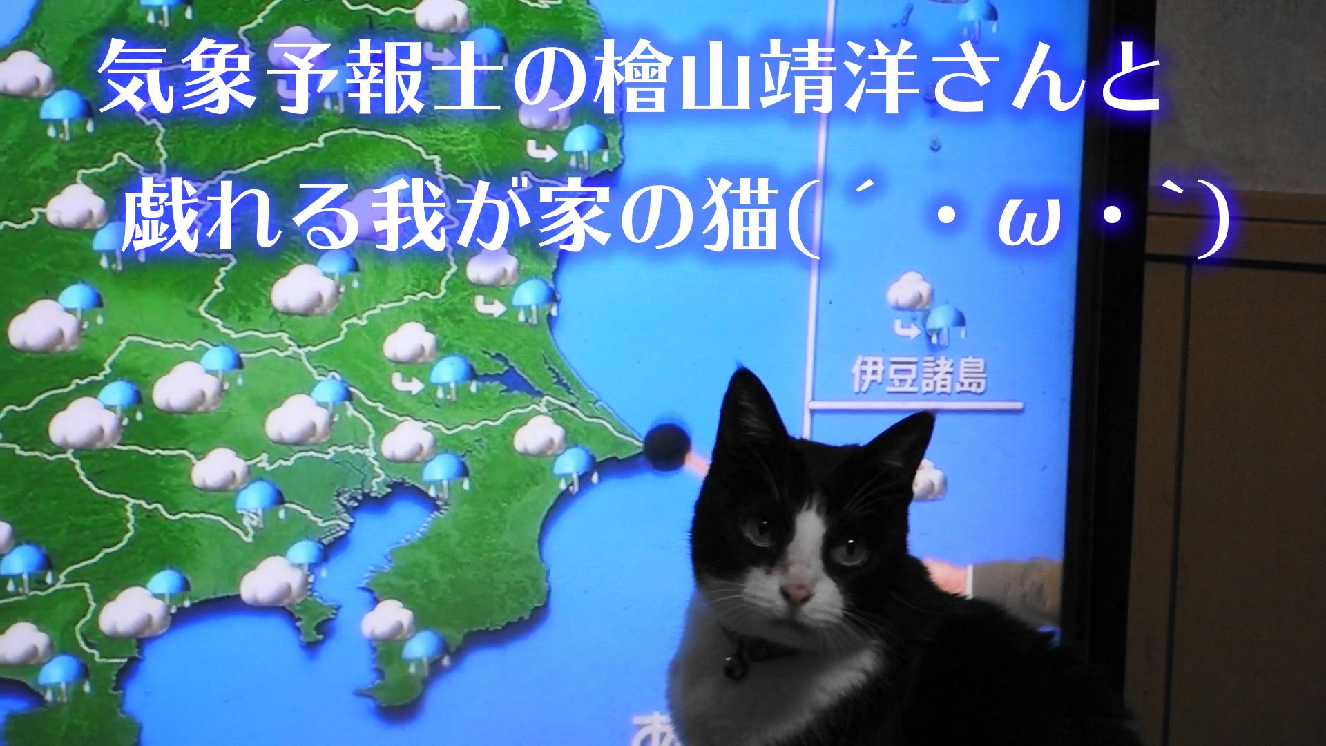 猫 天気予報